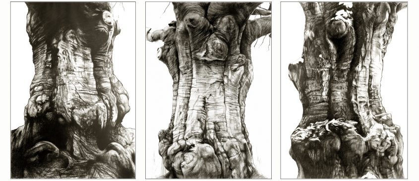 tafel vast gemaakt op boom